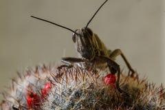 Insekt - pasikonik zdjęcia royalty free
