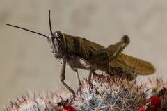 Insekt - pasikonik fotografia royalty free