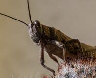 Insekt - pasikonik zdjęcie stock