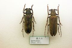 Insekt próbka zdjęcie royalty free