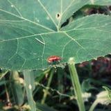 Insekt rodzina obraz royalty free