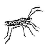 Insekt sgrasshopper - eine lebende Natur skizze Lizenzfreie Stockfotografie