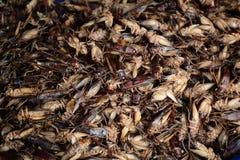 insekt smażący z solą dla sprzedaży Obraz Royalty Free