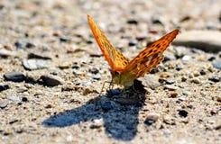 Insekt stepy obraz royalty free