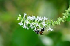 Insekt und Blume Stockbilder