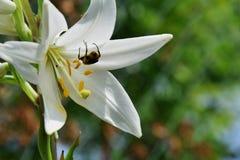 Insekt und Blume Stockfoto