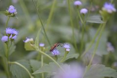 Insekt unter Sträuchen stockbilder