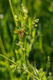 Insekt w łące Obraz Stock