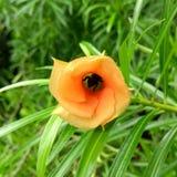 Insekt w kwiacie zdjęcia stock