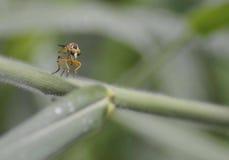Insekt w naturze Obraz Stock