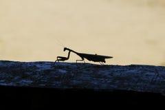 Insekt w Parkowy Naturalnym i Nacional w Mikumi, Tanzania krajobrazy Piękny Afryka w afryce Obraz Royalty Free