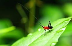 Insekt w ranku Zdjęcia Stock
