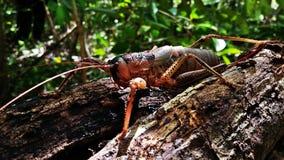 insekt w swój naturalnym siedlisku żyje w lesie fotografia royalty free