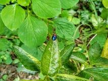 Insekt wyspa zdjęcie stock