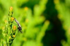 Insekt z zielenią fotografia royalty free