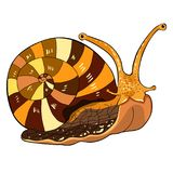 Insekta ślimaczka gastropod mollusk również zwrócić corel ilustracji wektora Obrazy Royalty Free