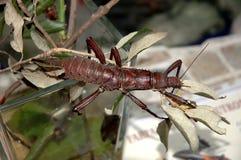 insekta kij obrazy stock