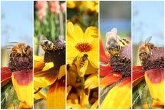Insekta kolaż Zdjęcia Stock
