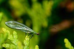 Insekta obsiadanie na krzaku zdjęcie royalty free