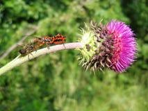 insekta pająk Obrazy Royalty Free