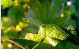 Insekta szczegół Zdjęcia Royalty Free