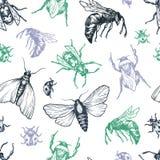 Insekta wzór Zdjęcia Stock