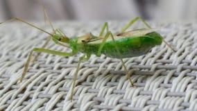 Insekta zakończenie zdjęcia stock
