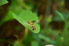 Insekta zamknięty up obraz stock