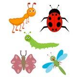 Insekte Stockfoto