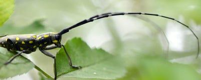 insekte Stockfotografie