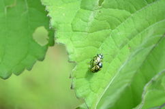 insekte Lizenzfreie Stockfotos