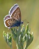 Insekte in der Natur lizenzfreie stockfotos