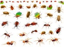 Insekte eingestellt lizenzfreie stockfotografie