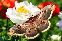 Insekte und Blumen Wild lebende Tiere und Anlagen Schutz der Fl?sse, die Meere, Ozeane stockbild