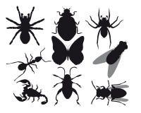 Insekten Lizenzfreie Abbildung