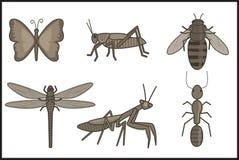 Insekten Lizenzfreie Stockbilder