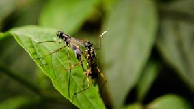 Insekten auf einem Blatt stockbild