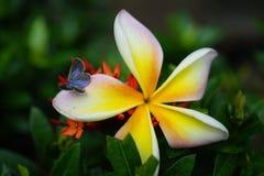 Insekten-Blume Lizenzfreies Stockfoto