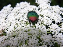 Insekten-Details Lizenzfreie Stockfotografie