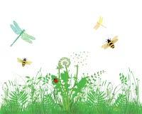 Insekten, die über Wiese fliegen Lizenzfreie Stockfotos
