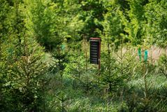 Insekten-Fänger im Wald lizenzfreies stockfoto