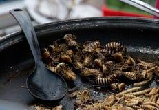 Insekten gebraten in einer Wanne Lizenzfreies Stockfoto