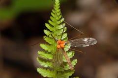 Insekten im Wald am Adlerfarn Stockfotos