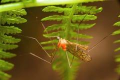 Insekten im Wald am Adlerfarn Stockbild