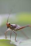 Insekten-Nahaufnahme Lizenzfreie Stockfotos