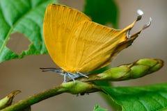 Insekten, Schmetterling, Motten, Wanze Stockfotos