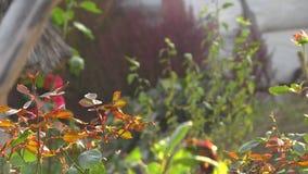 Insekten-Schwarm fliegt stock video