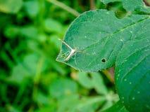 Insekten verbreiteten ihre Flügel auf grünen Blättern in der Natur stockbilder