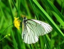 Insekten von Wiesen Lizenzfreies Stockbild