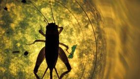 Insektenanalyse stock footage